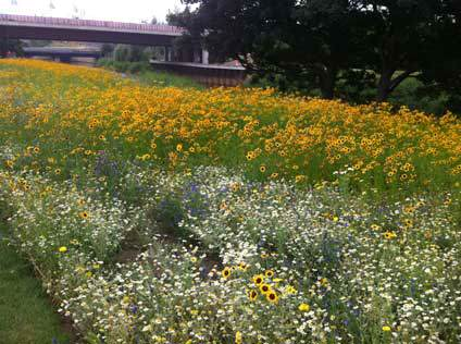 Wild Flowers at Londons Olympic Park