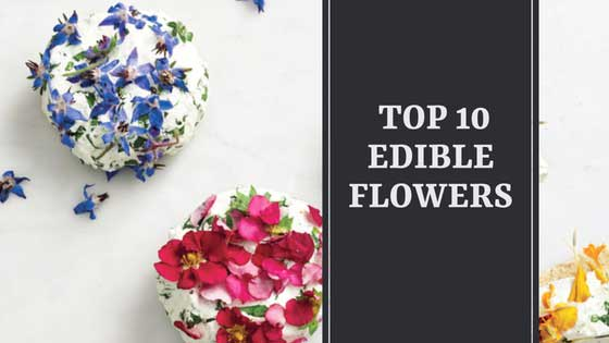A List of Top 10 Edible Flowers