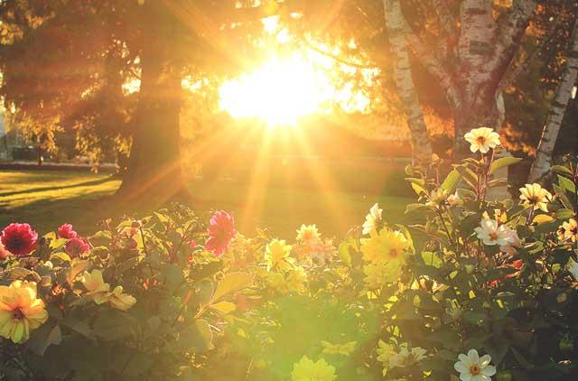 sun loving flowers90