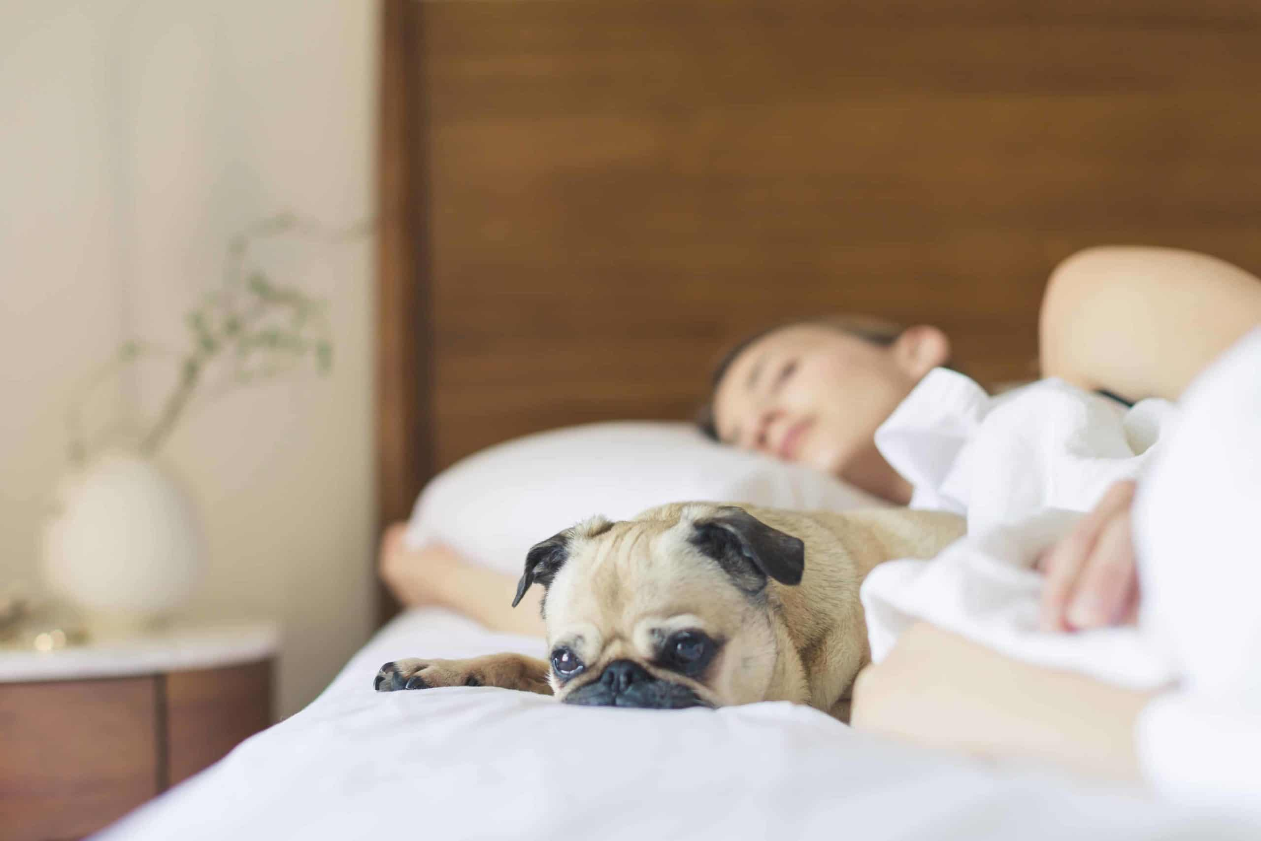 bed bedroom cute dog 545016 1 scaled