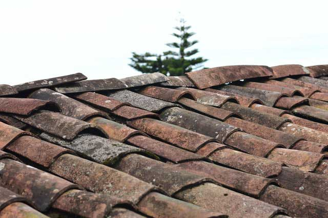 selective focus photo of brown roof shingles 1453799