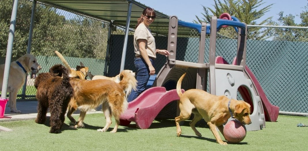 Top Reasons To Use a Doggy Daycare
