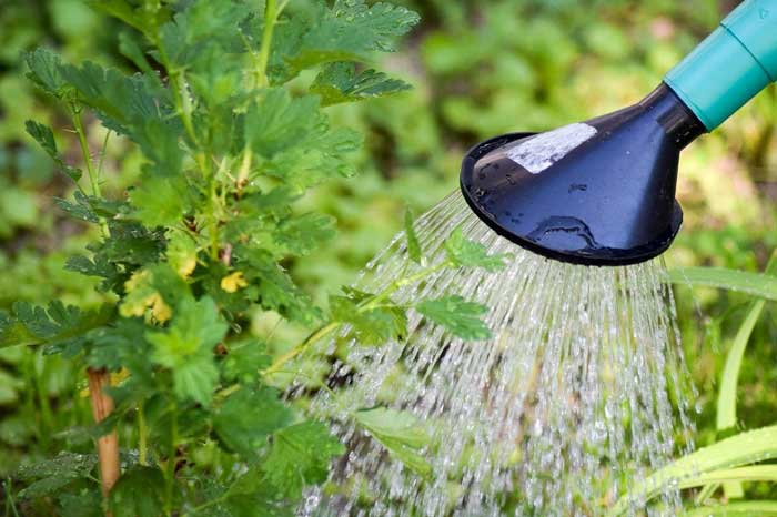 5 Plumbing Tips for Garden Irrigation Systems