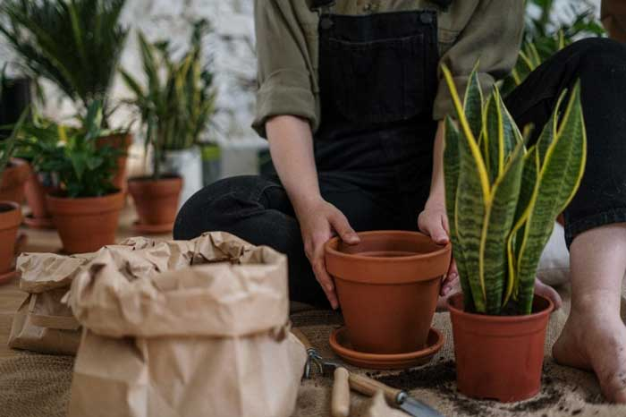 6 Gardening Trends Expected to Grow in 2021