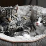7 Questions to Ask Yourself Before Getting a Kitten