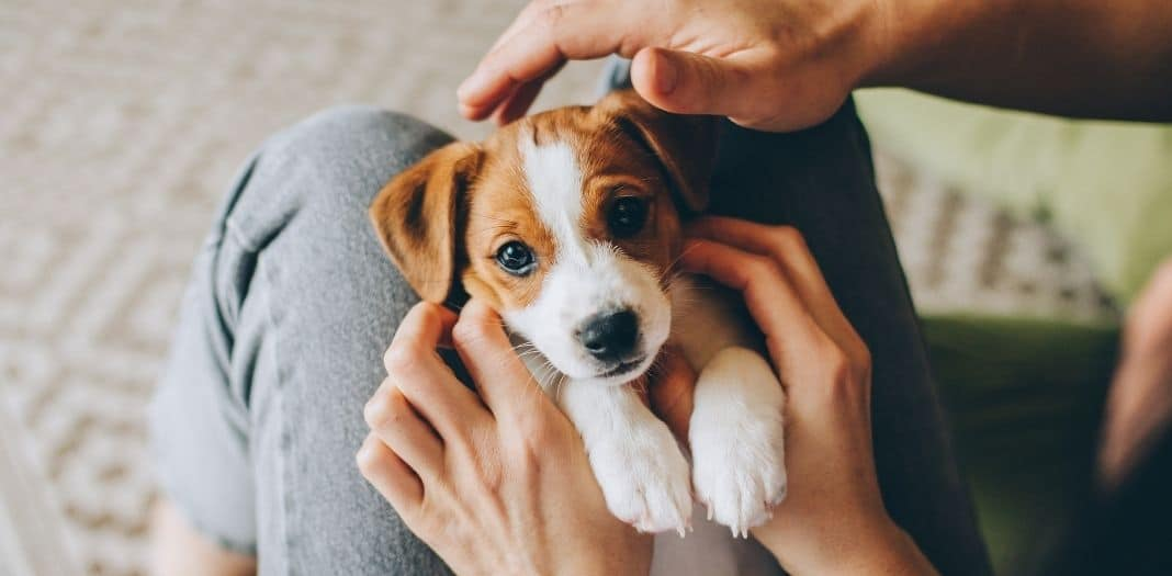 Things To Consider as a First-Time Dog Parent