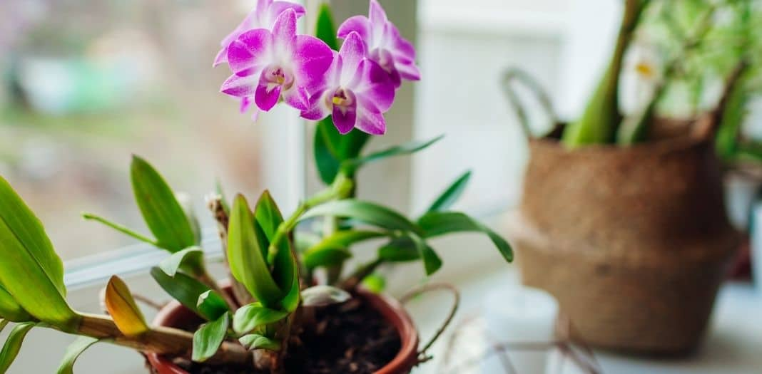 Simple Ways To Promote Wellness in Your Living Space
