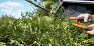 Reasons to Care for Your Landscape Year-Round