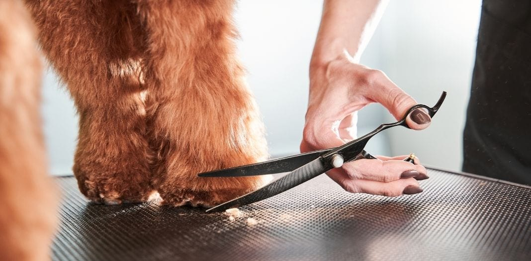 Tips for Professionals: How Groomers can Handle Nervous Dogs